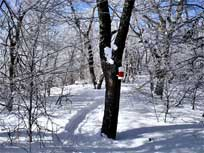halcot wild forest