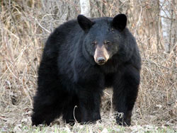 camper sets off SPOT at Adler Lake because of a bear eating her food on august 9, 2020.